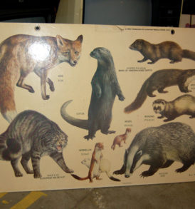 Education Sign Animals