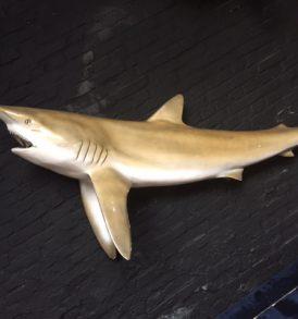 Fish 10 - Shark