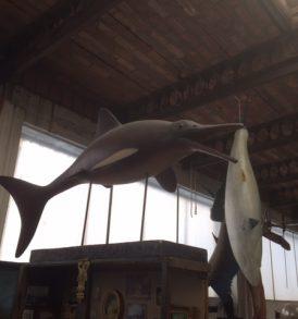 Fish 9 - Dolphin